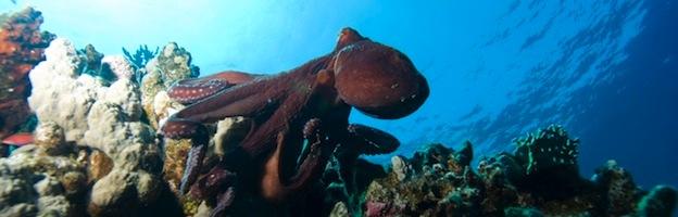 Octopus Habitat