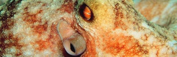 octopus sense