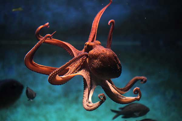 Can You Keep An Octopus As A Pet? Here's What You Need To Know