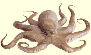 top octopus facts